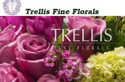 Trellis Fine Florals - Manhattan Florist - Fresh Flowers for NYC
