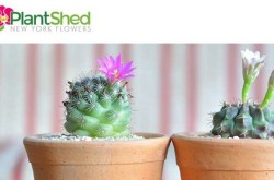 Plantshed.com | New York Flower Delivery