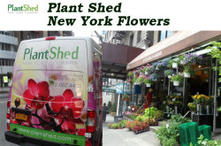 Plant Shed New York Flowers - NYC Florist