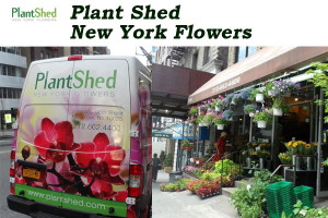 Plant Shed New York Flowers