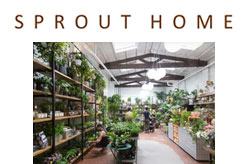Sprout Home Brooklyn NY