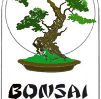 Bonsai of Brooklyn