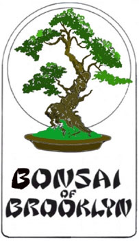 Bonsai of Brooklyn
