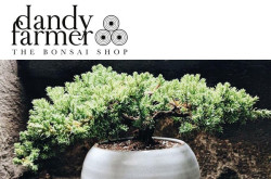 Dandy Farmer Bonsai Brookly