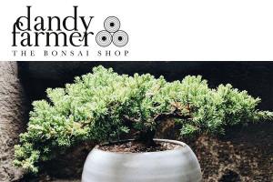 Dandy Farmer Bonsai Brookly
