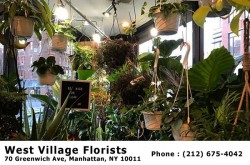 West Village Florist 70 Greenwich Ave