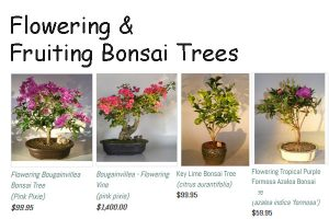 Flowering Bonsai Trees