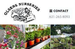 Olsens Nursery Nesconset NY